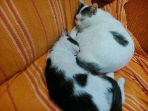 Miau 5
