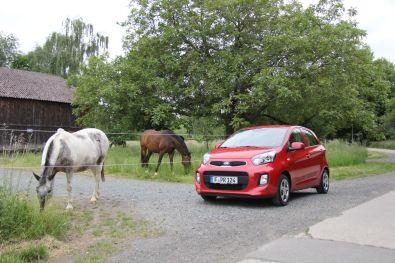Kia Picanto 2015 mit Pferden