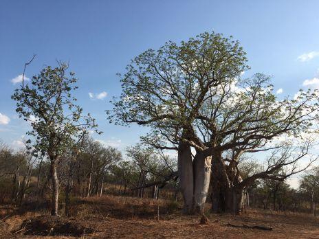 LET2015 Bäume