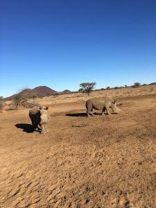 Tag 3: Rendezvous mit den afrikanischen Leoparden