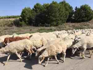Mit dem Skoda Karoq unterwegs auf Sizilien