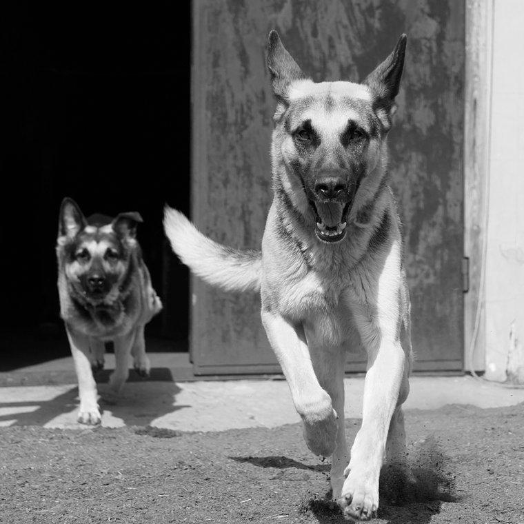 Auf der Festplatte wurden Bilder von Hunden sowie Landschaftsmalereien gefunden. Gemäss Experten handelt es sich sowohl bei den Fotos als auch bei den Gemälden um absoluten «Amateur-Schrott.» bild: shutterstock