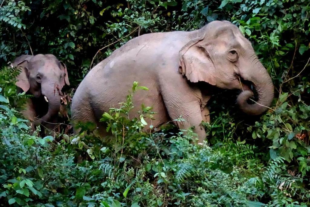 Elefantenfamilie im Khao Yai.