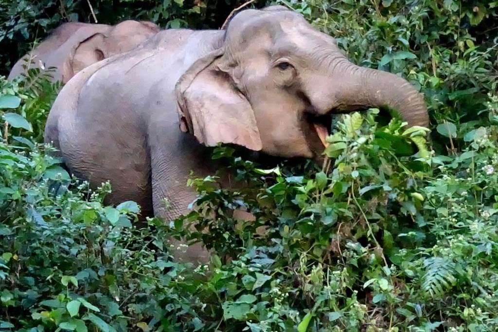 Elefanten im Khao Yai Park.