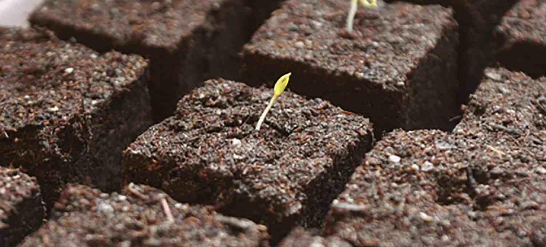 Gemüse Auf Speed ? Blumen, Kohl & Rock'n'roll Gewachshaus Bauen Tipps Hobby Gartner Anzucht Gemuse