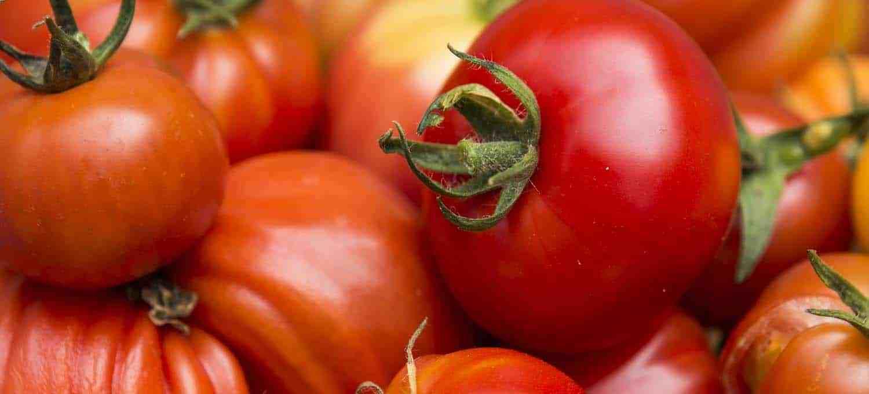 Tomatenpflanzen kaufen