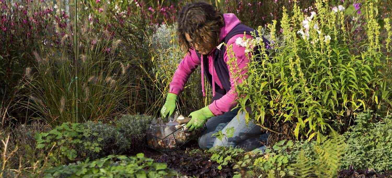 anleitung tulpen pflanzen