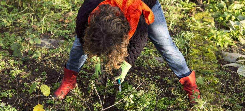 rund ums jahr eigenen salat ernten - erprobter anbauplan, Gartengerate ideen