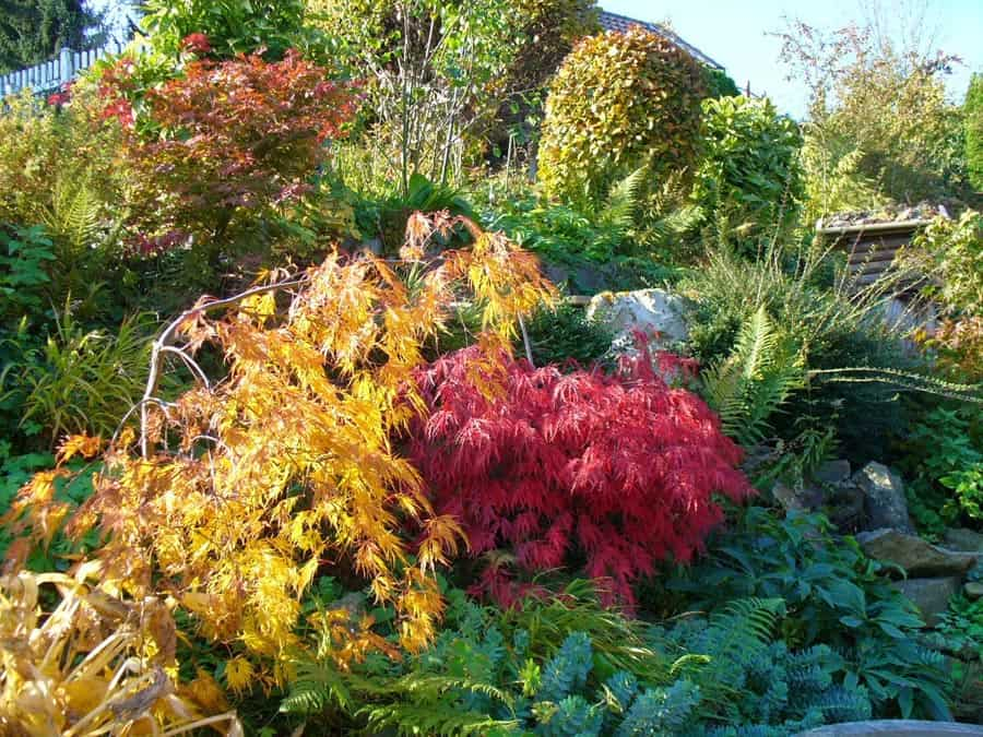 Farbe im Garten im November