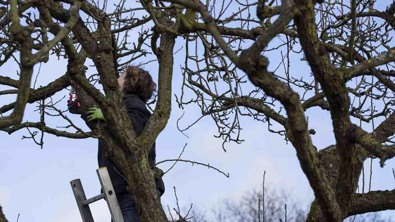 Obstbaum schneiden