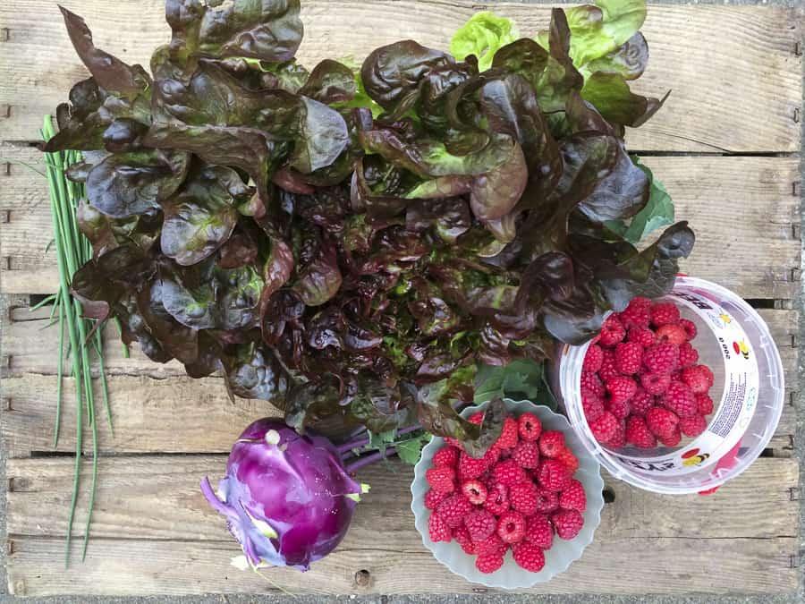 Heute im Erntekorb Salat, Kohlrabi, Himbeeren