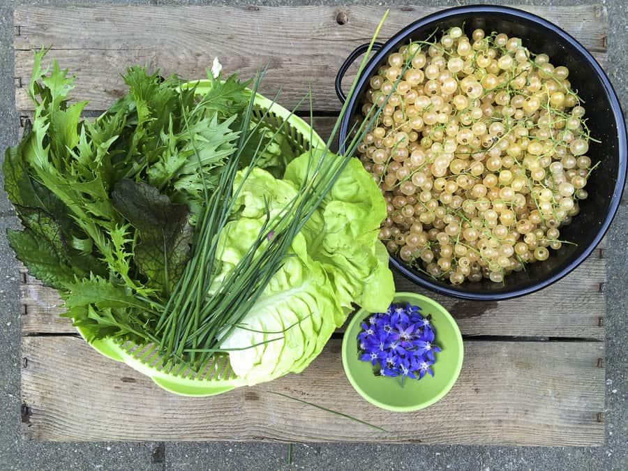 Weiße Johannisbeeren, Kopfsalat und Asia-Salat