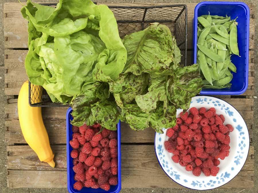 Salat, Himbeeren, Zuckererbsen, gelbe Zucchini