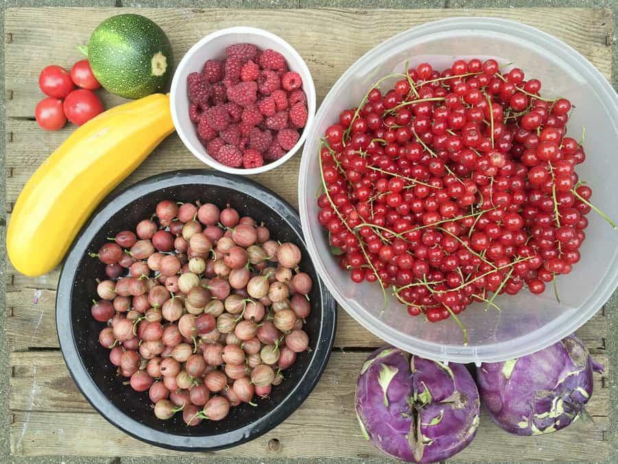 Johannisbeeren, Stachelbeeren, Kohlrabi und Zucchini