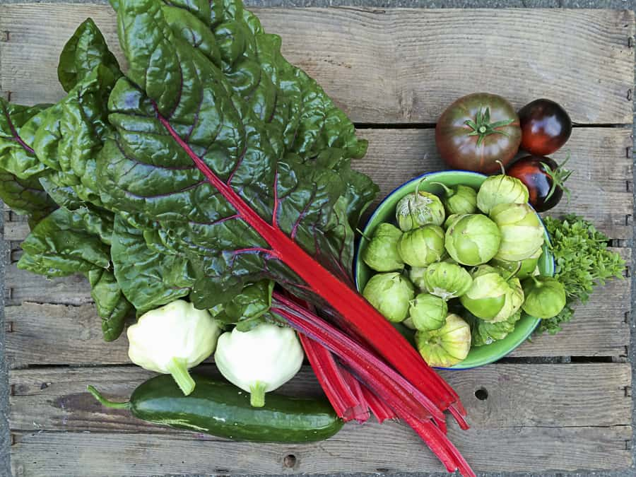 Ernte: Mangold, Patisson, Gurke, Tomate, Tomatillo