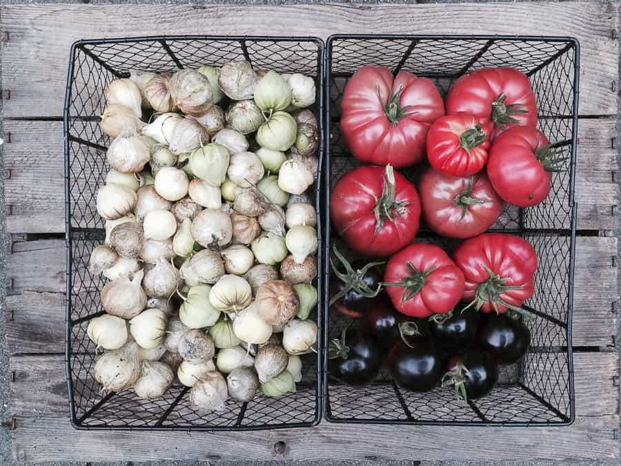 rote und schwarze Tomaten, Tomatillos
