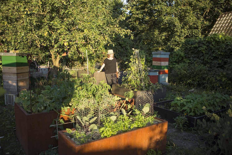 Garten Schadlinge Bekampfen Spinnmilben Bekampfen Liebe Deinen Garten