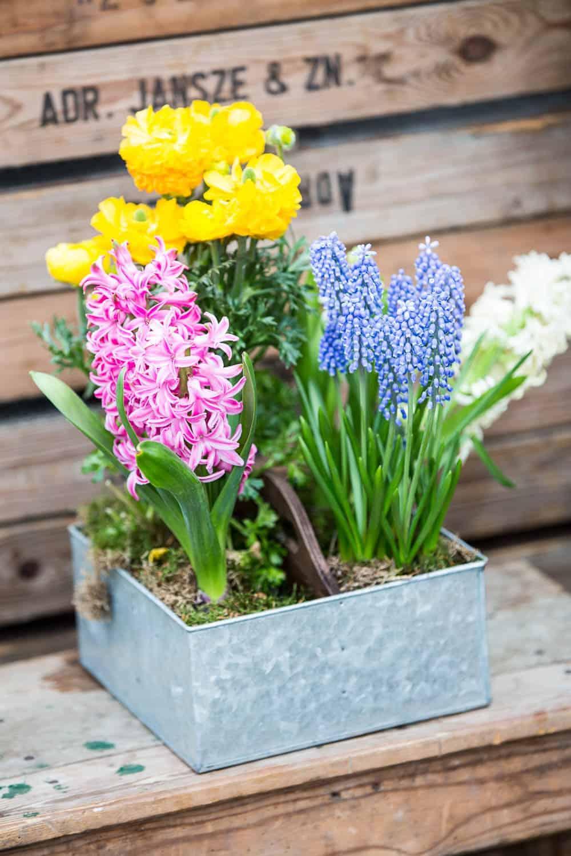 tulperij tulpenparadies holland