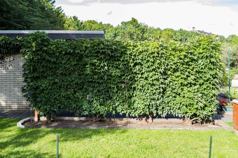 Ideen Fur Sichtschutz Im Garten 20 Ideen Fur Den Garten Die