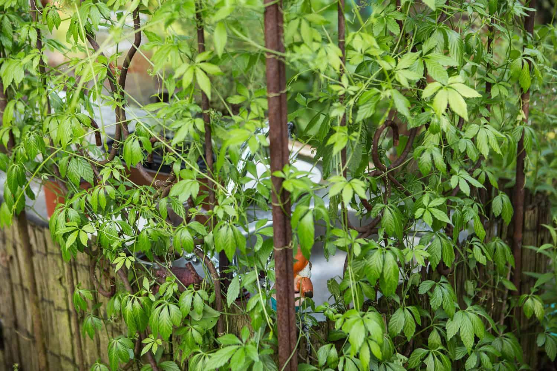Sichtschutz Ideen F R Den Garten