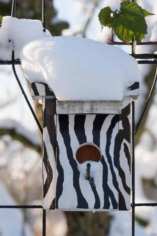vogelfutter selber machen Winter