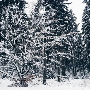 Is nich wahr es schneit schon wieder Und wienewLinenewLineletitsnow snow schnee