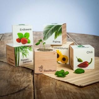 ecocube-pflanzen-im-holzwurfel-b94