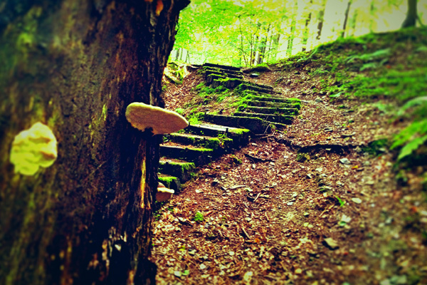 GPS Tour durch den Wald