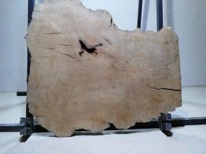 Tischplatte aus Massivholz Platane C/W 071