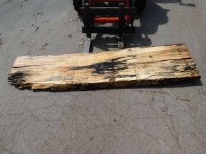 Holzplatten kaufen Buche O-00269