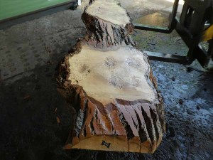Holzplatten kaufen Pappel S-00102