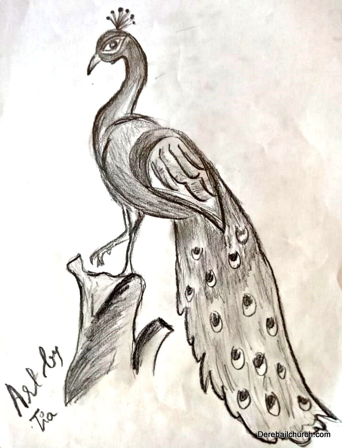 Pencil Sketch Of A Peacock By Tianna Melanie Dsouza