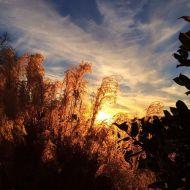 """""""Thanksgiving Nashville sunset """" Courtesy: derekhough IG"""