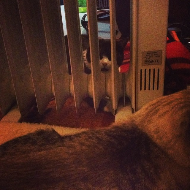 Life inside cat prison :) - from Instagram