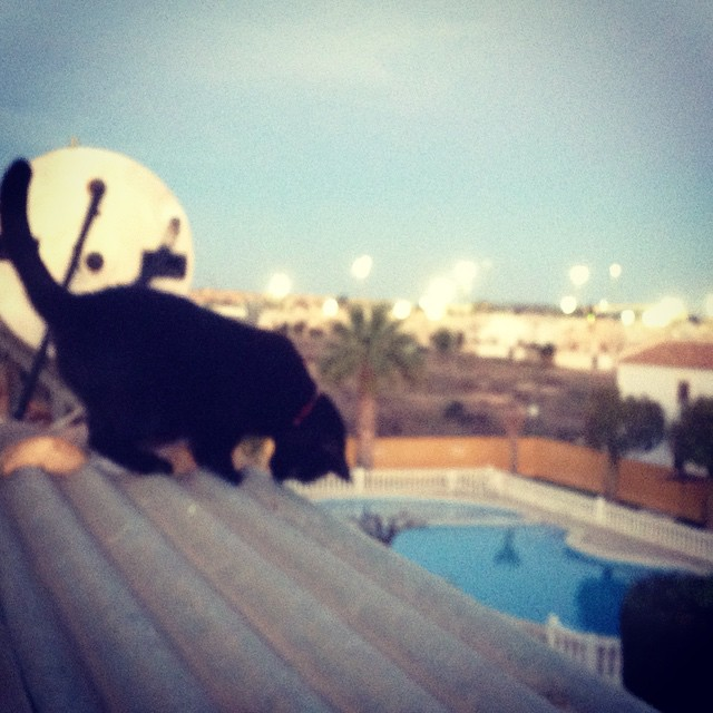 #cat #gata #torrevieja #costablanca #spain #españa - from Instagram