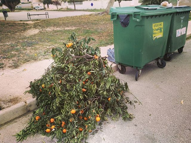 Where oranges go to die.#autohash #Torrevieja #Spain #ComunidadValenciana #food #foodporn #foodie #foodpicoftheday #foodpic #foodgasm #instafood #yummie #fruit #agriculture #grow #farm #container #garden #leaf #outdoors #summer #garbage #flora #environment #flower #crate #industry #tree #waste #pasture - from Instagram