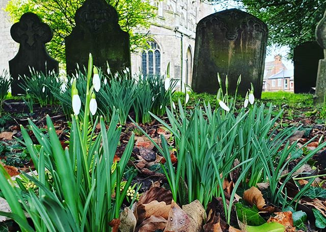 #autohash #UnitedKingdom #England #garden #flower #grass #flora #leaf #outdoors #cemetery #lawn #nature #grave #architecture #yard #park #stone #tree #summer #wood #old #traditional #snowdrops #devizes - from Instagram
