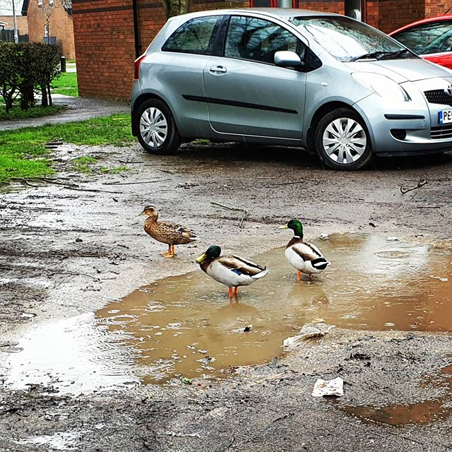 #autohash #UnitedKingdom #England #water #outdoors #nature #bird #pool #beach #sand #soil #seashore #river #animal #road #wet #environment #duck #street #mud - from Instagram