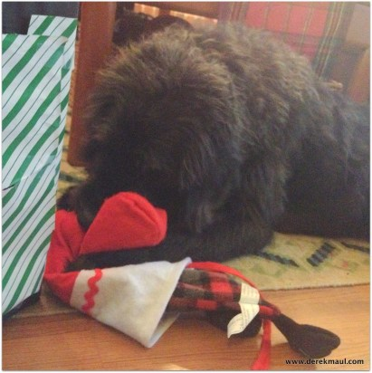 Scout ate her stocking