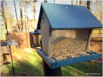 Cheap seed in the big feeder