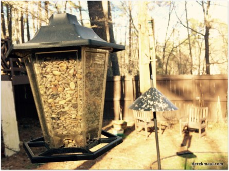 "expensive ""wild bird"" food in the small feeder"