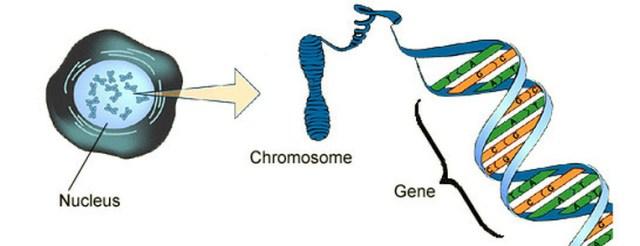angeboren oder anerzogen -- was sagen die Gene über uns aus?