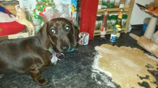 Lucy sticht die Hundeplätzchen aus und klaut Teig