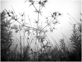 Blumau 2 [© Thomas Steinbichler, 2015]