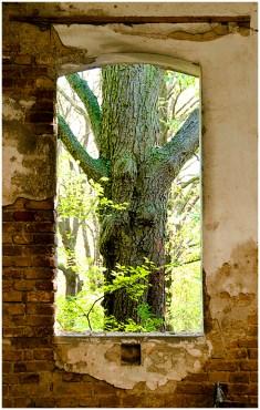 Ruinen 2 [© Brigitte Irsa, 2015]