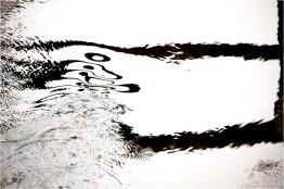 12_Spiegelung im Wasser [© Peter Paulhart, 2014]