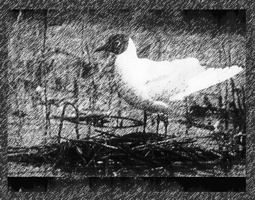 """Szenenbild aus dem Film """"Die Lachmöwe"""""""