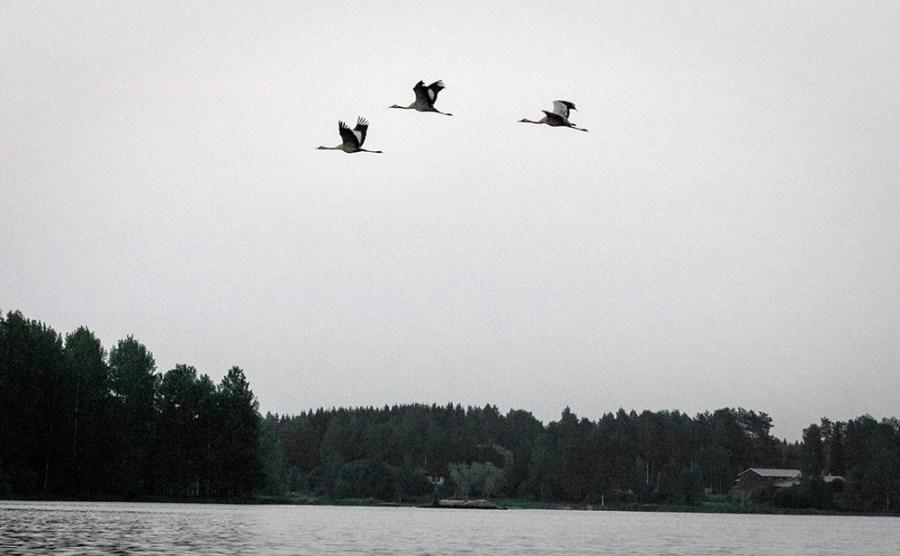 3 Wasservögel über einem see am Abend.