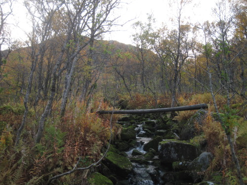 Fabelwald mit Fluss