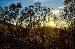 Tiefes Herbstlicht